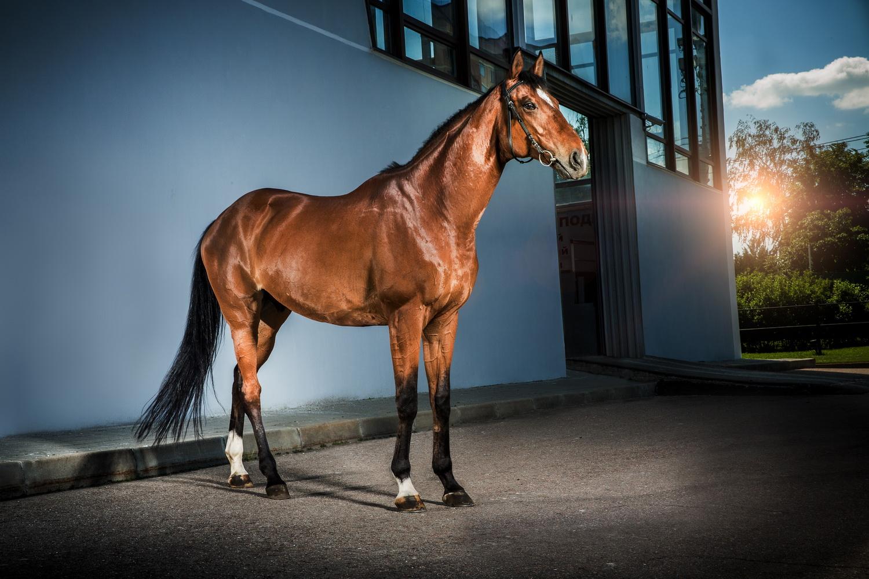 Фотосъемка лошадей